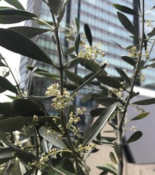 前回は白丁花の花が初めて咲いた、という話を書きましたが… の画像